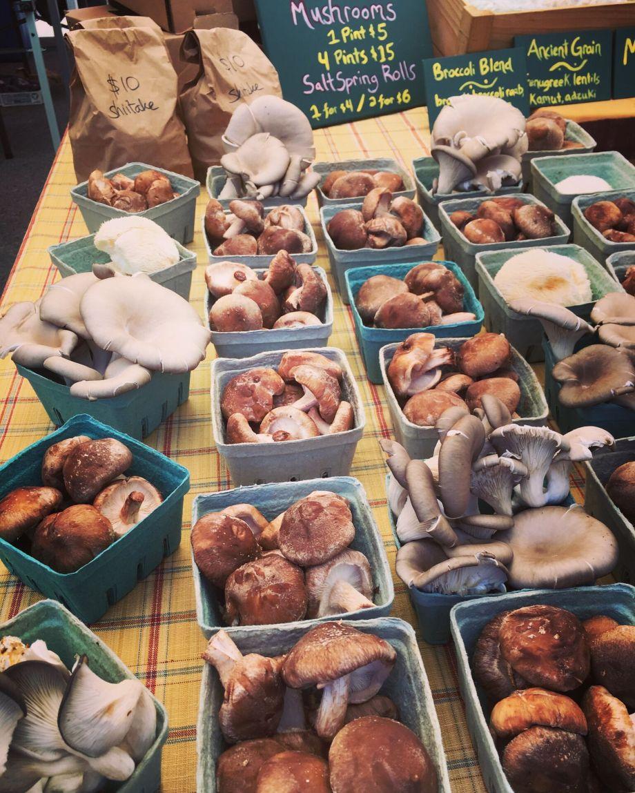 salt-spring-mushroomtopia-moderndaynomads-com